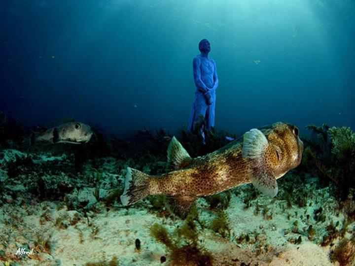 Underwater Museum Cancun Mexico Mexico Address and Map on map of cancun mexico, cancun underwater museum tours, attractions in cancun mexico, water park in cancun mexico, padi scuba diving cancun mexico, cenote cancun mexico, coco bongo cancun mexico, things to do in cancun mexico, cancun underwater museum snorkeling, museum of statues cancun mexico, the royal cancun mexico, cancun underwater museum map, the city club cancun mexico, moon palace cancun mexico, underwater river mexico, underwater statues mexico, me cancun mexico, underwater hotel mexico, ocean water temperature cancun mexico,