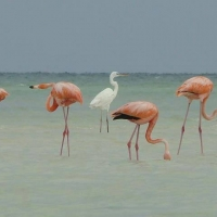 Holbox Collection Day Tour