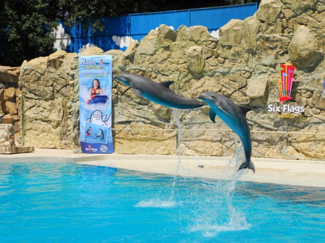 Dolphin Discovery Puerto Aventuras Mexico Address and Map